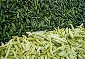 8427317-fresh-organic-cucumber-gherkins-at-a-street-market-in-istanbul-turkey--carsamba-fatih-pazari-bazaar